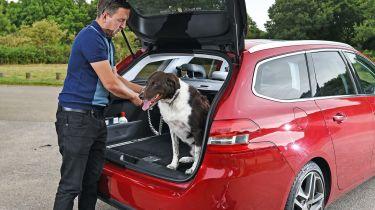 狗让你更仔细地开车